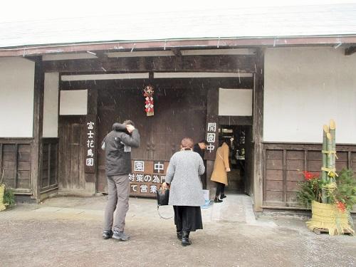 今年も富士花鳥園に来ました。