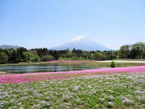 富士芝桜まつり 2018年