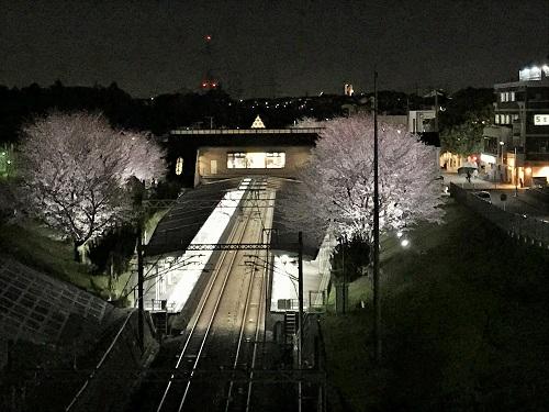 弥生台駅の桜のライトアップを撮影しに来ました。