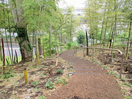 南本宿第三公園にて、たけのこ掘り体験