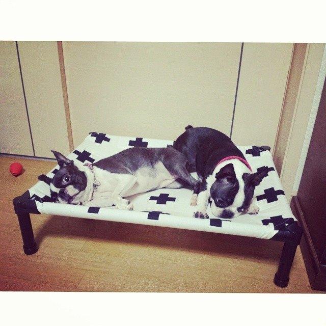 愛犬の為にドッグコットをプレゼントしよう-Blog