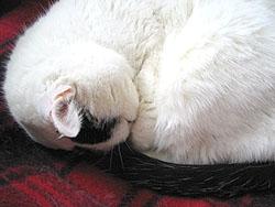 丸くなって眠るミーコ