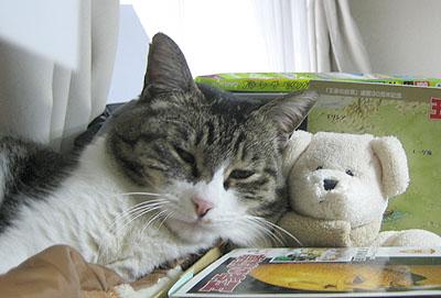 チョボ@ぬいぐるみを枕にして昼寝中