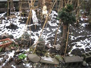 一昨日までの庭