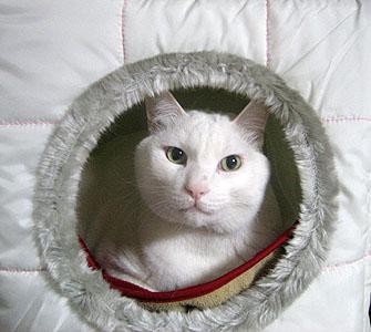 猫ベッドでくつろいでいるマル