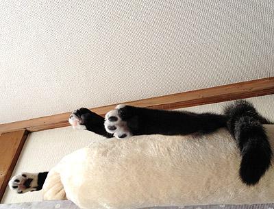 猫棚からコンニチハ