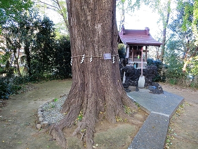 東京都北区 中十条 イチョウの樹