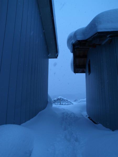 雪の1月2012 01