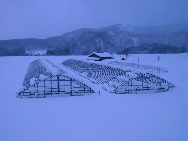 雪の1月2012 04