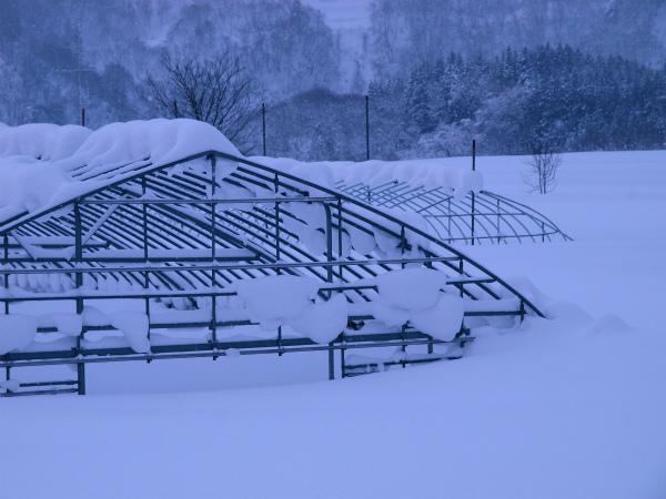 雪の1月2012 05