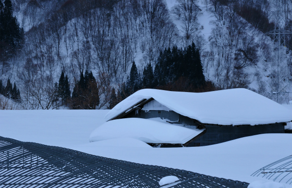 雪の1月2012 06