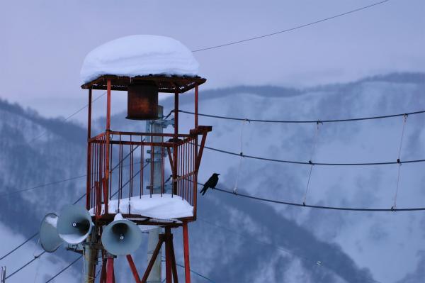 雪の1月2012 07