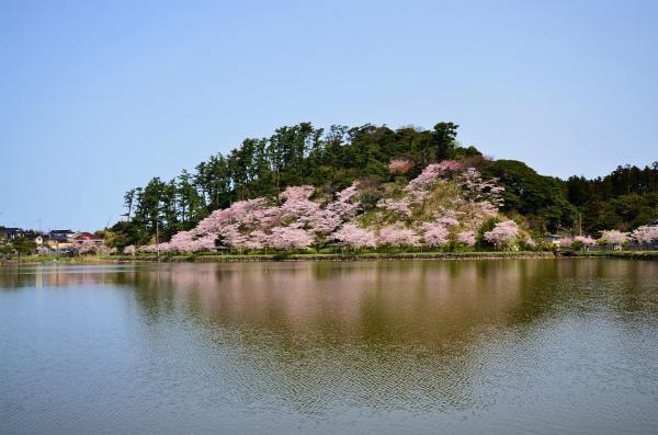 勢至公園2012 014
