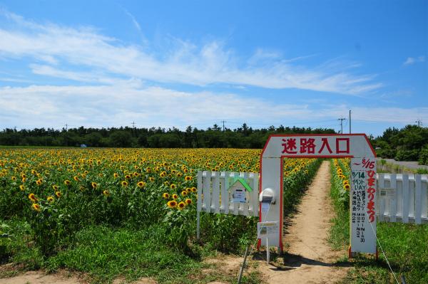 西目ひまわり 2012 02