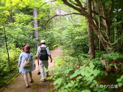 赤沢自然休養林・散策/木曾ひのきの家もりぞうブログもりもり広場.jpg