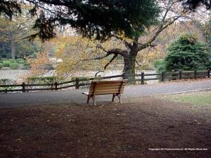Photograph ofThe Sinsyuku Gyoen National Garden