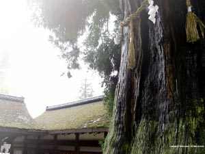 Desktop Wallpaer of Nara Park in Japan