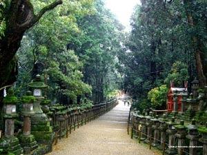 Desktop Wallpaer of The Nara Park in Japan