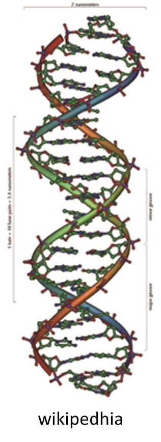 DNA_らせん構造.jpg