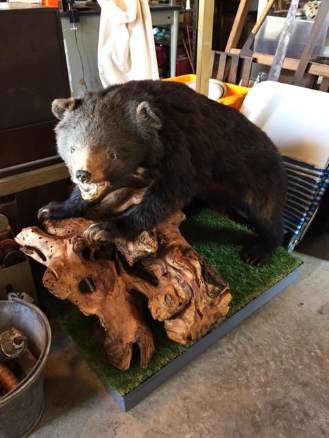 小熊の剥製