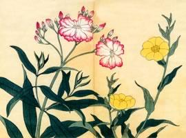月見草、夾竹桃:「四季の花」