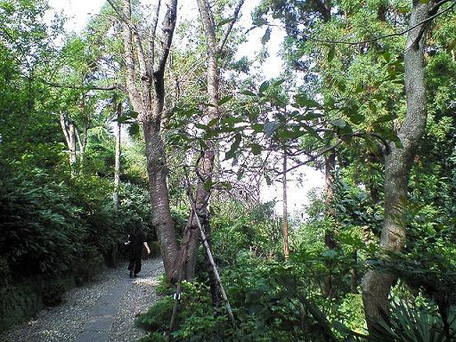 鎌倉山に広がる森
