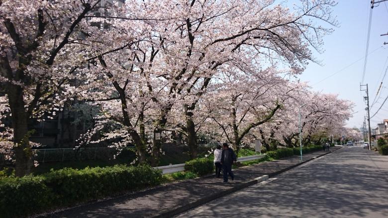 上飯田 桜