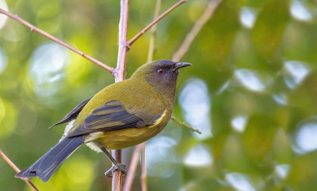 長方形の鳥