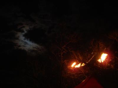 lantern fell onto tree, caught fire