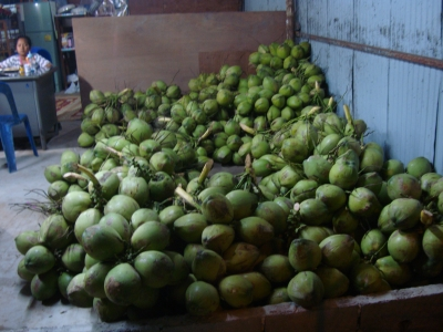 Tons of Coconuts