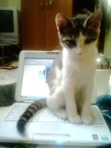 2007/7/27「なぜ猫はキーボードに乗るのか」