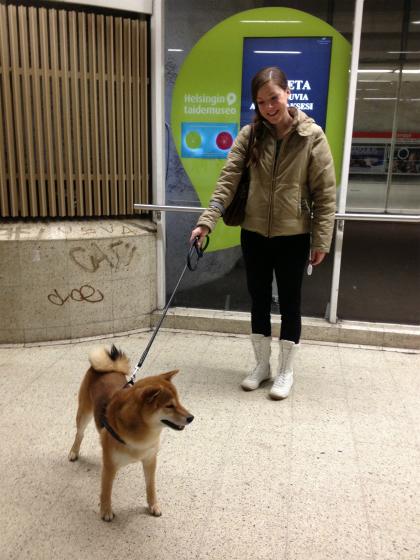 ヘルシンキで見つけた柴犬