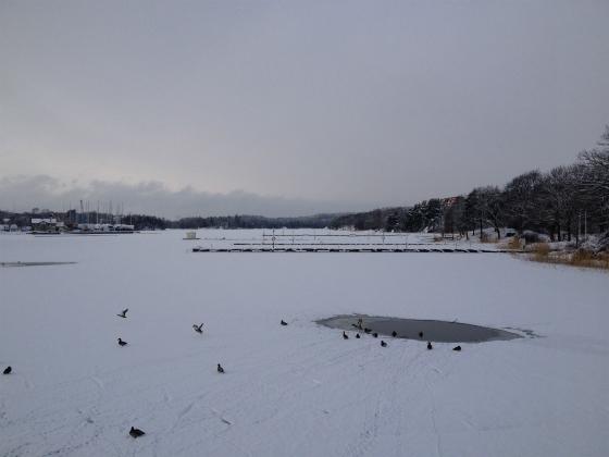 凍った海の上を鳥たちが。