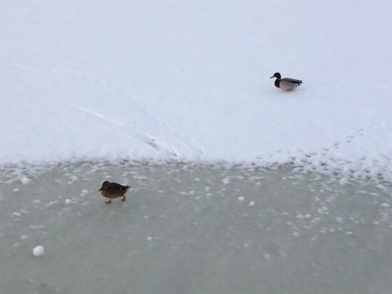 グスタフスベリにいつもいる鳥たち