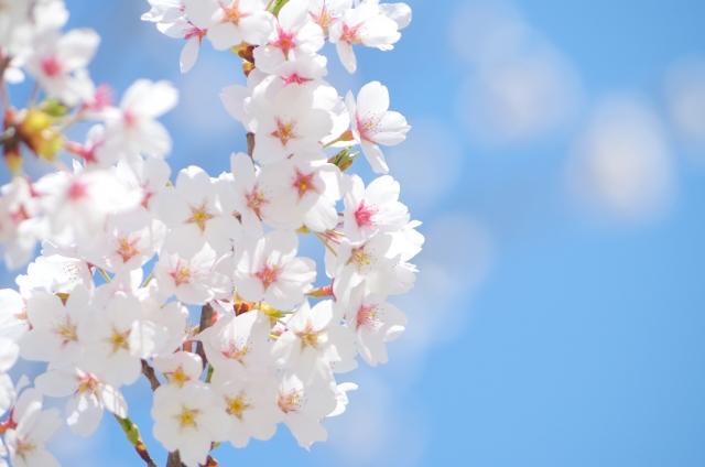 北海道写真&情報ブログ