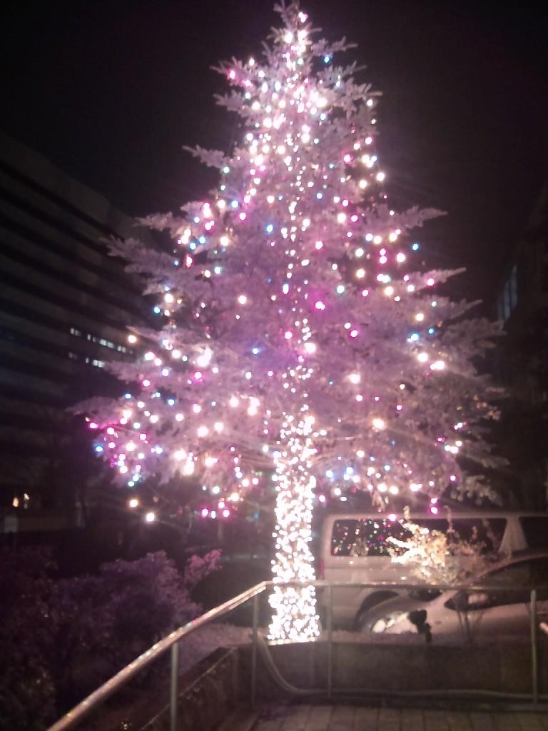 洛星のクリスマスツリー