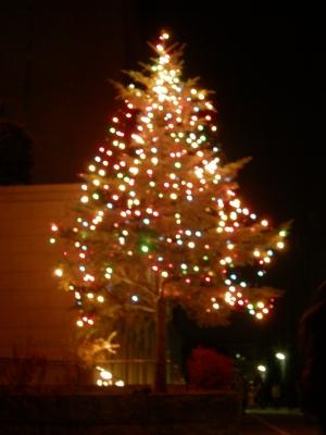 2010年洛星のクリスマスツリー
