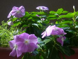 どんどん咲く花