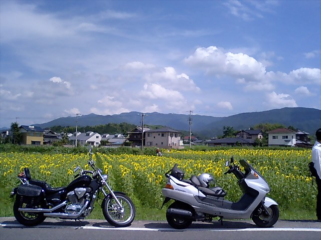 仲南町のヒマワリ畑