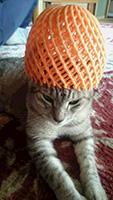 スルタン猫