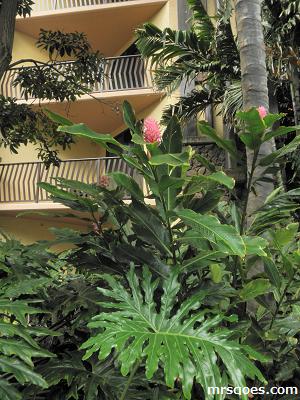 植物アウラニ.png
