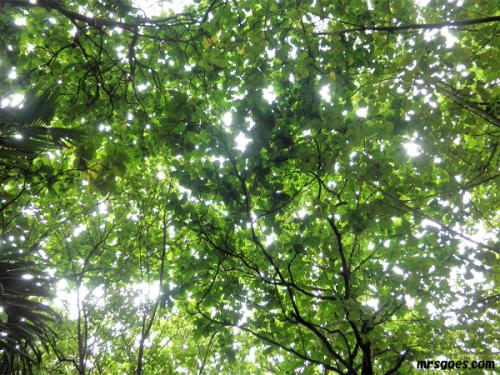 379 CMに出た木