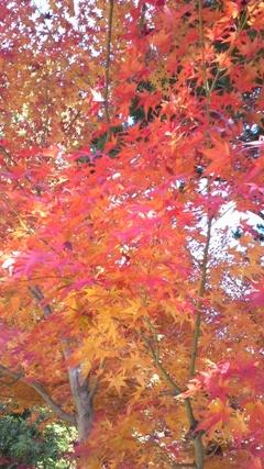 京都の紅葉4