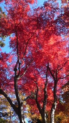 京都の紅葉10