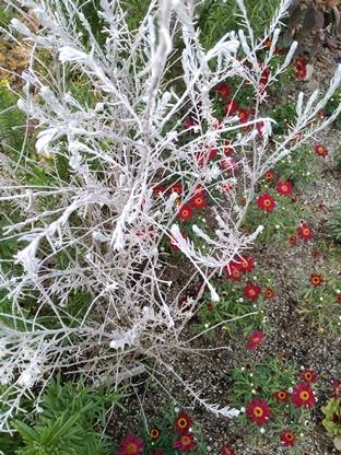 白い木と赤い花
