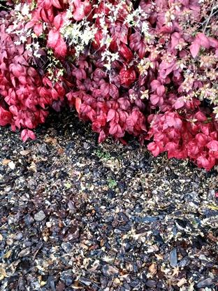 赤い葉っぱと地面