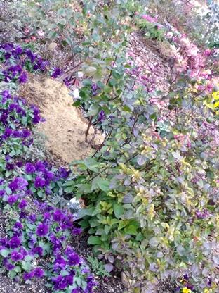 紫とピンク全体ぼやけ花々