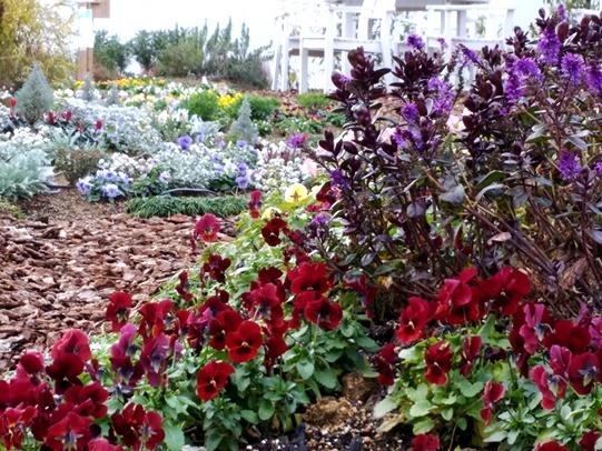 紫の花、赤パンジー、後ろに花畑
