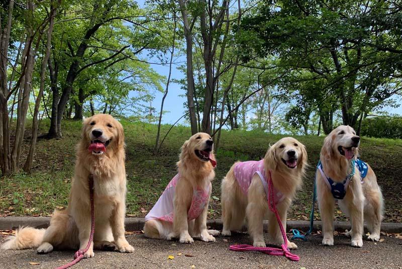 駆け足の夏休み☆犬編