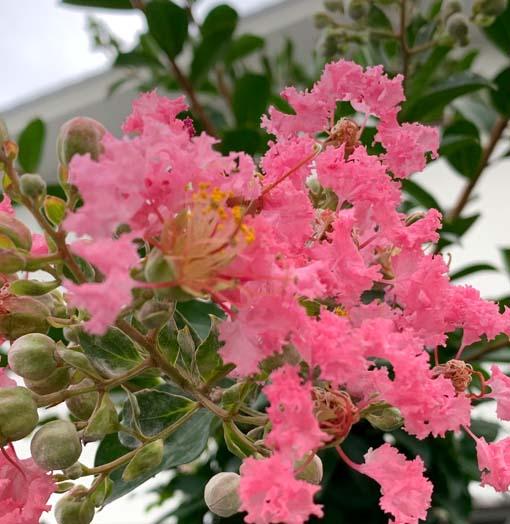 季節の花便り☆